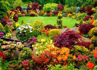 Flowering and Ornamental Plants